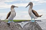 Galápagos MY Angelito